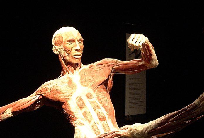 Anatomia dla plastyków